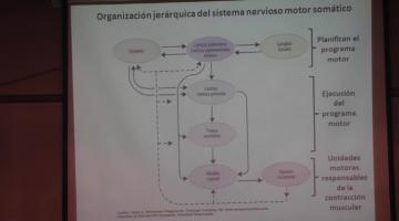 Fisiología 2020. Sistema Nervioso Motor I.