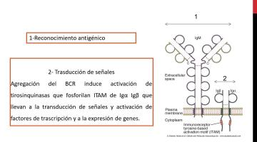 Inmunologia Teorico 4 A