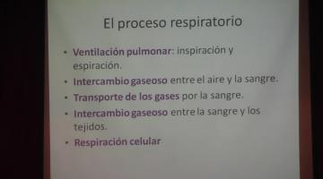 Fisiología 2020. Respiratorio II.