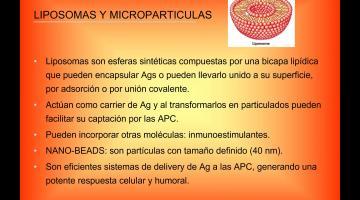 Inmunología. Adyuvantes y vacunas.
