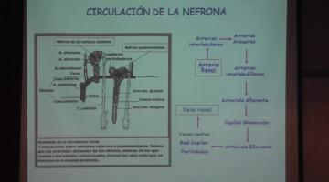 Fisiología 2020. Renal I.